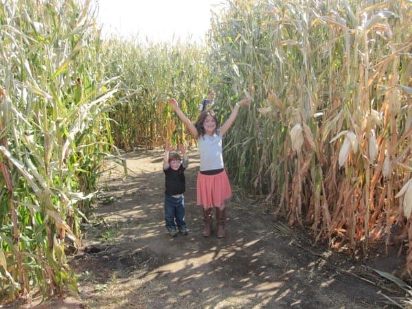 Twin Cities Harvest Festival & Corn Maze – Family Fun