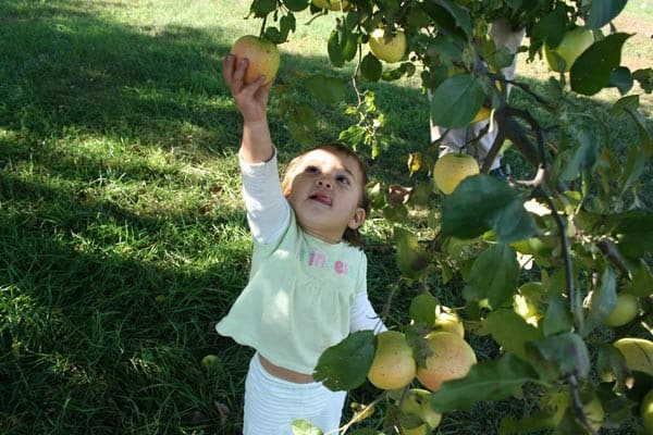 apples mn