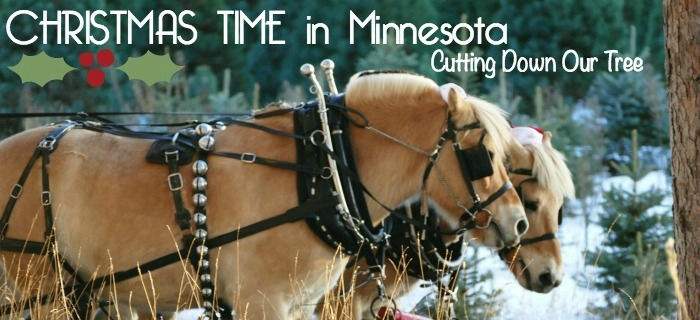 Christmas time in mn cutting down a tree 2014 family blog cover