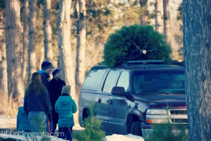 christmas tree truck art nature cutting down diy 2014 hansen farm life in minnesota blog