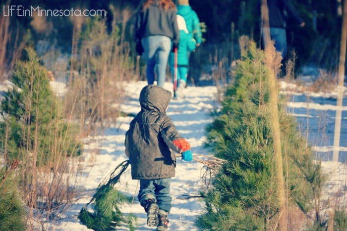 hiking hunt christmas tree farm ramsey mn 2014 family fun winter