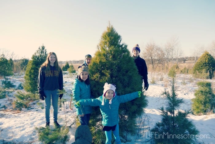 places ideas where to cut down christmas tree in mn twin cities farm 2014 best