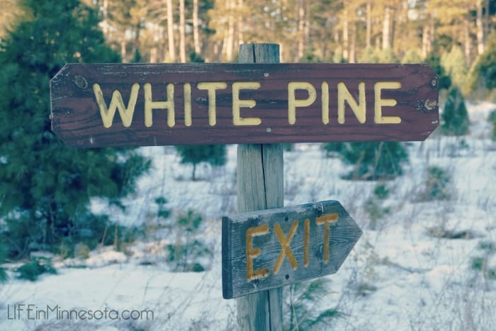 white pine exit wooden tree farm sign