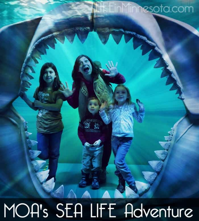 MOA Sea Life adventure review 2015 event life in mn blog