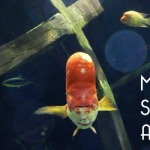 MOA's SEA LIFE Adventure mn life blog review 2015 COVER