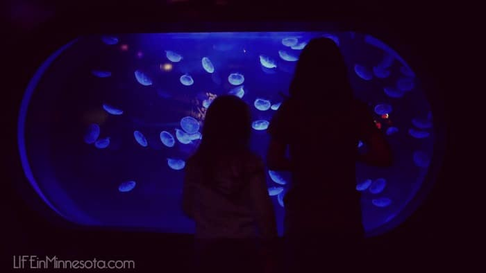 jelly fish sea life mall of america trip with kids underwater world 2015 life in minnesota blog