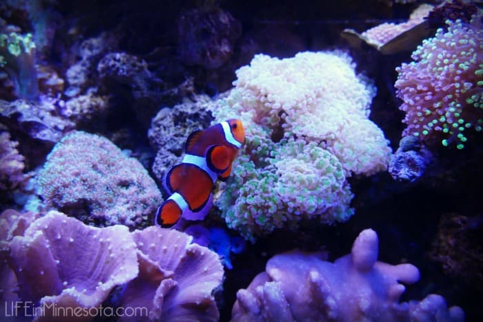 nemo clown fish sea life adventure 2015
