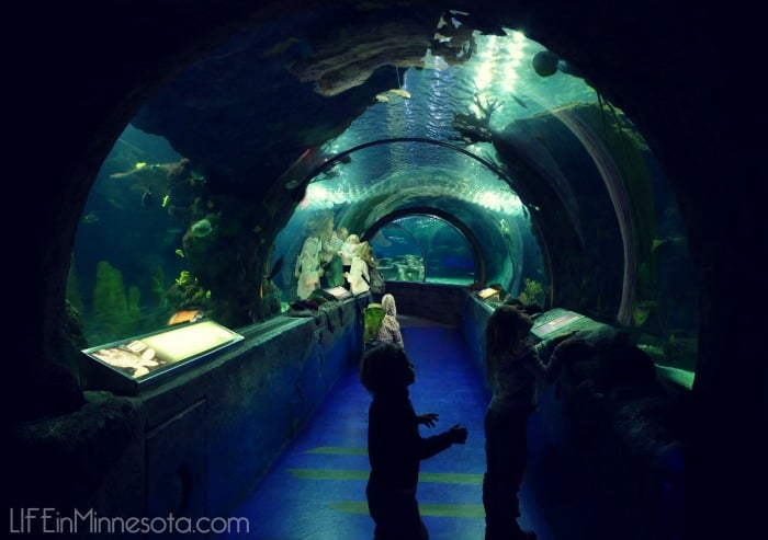 under water sea life tunnel review mall of america visit kids 2015