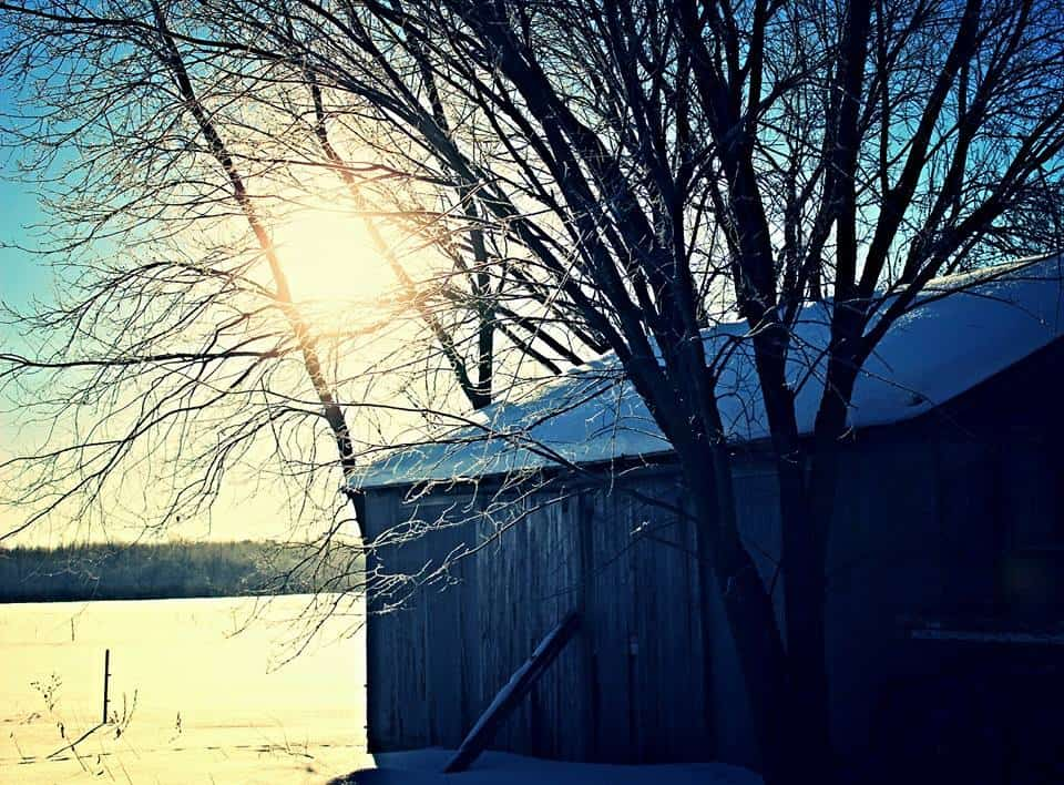 Minnesota Frosty Mornings, Near Cambridge, MN. Sent In By: Allyssa Maree Morley 1/11/2015