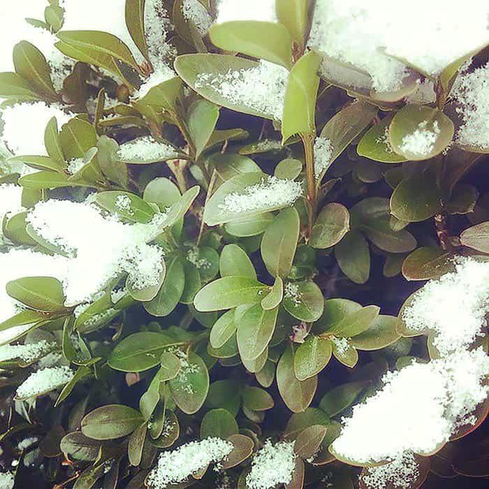 Spring Planting For Winter Interest