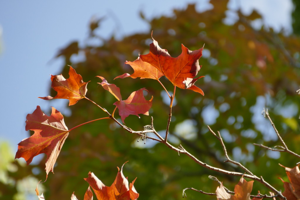20 great places for fall leaves mn