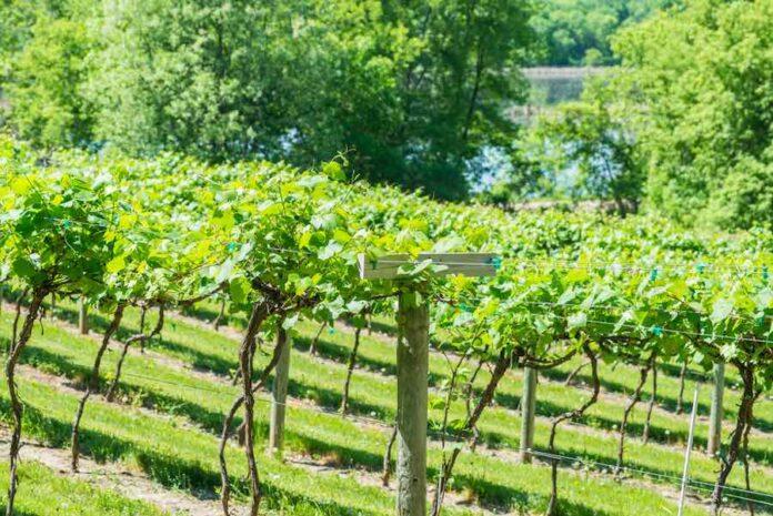 Best Minnesota Wineries