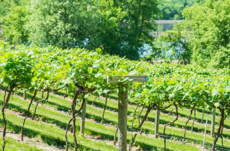 Best Minnesota Wineries