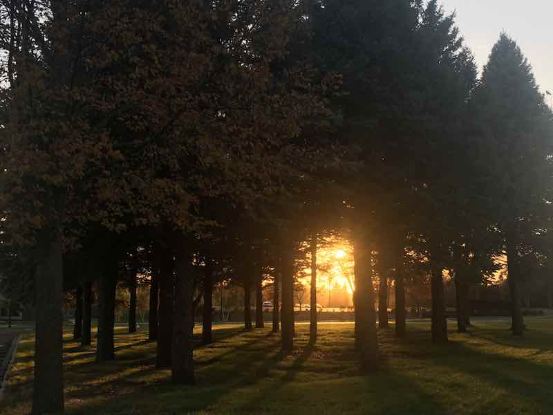 Things to do in Willmar MN - Trees in sunset.