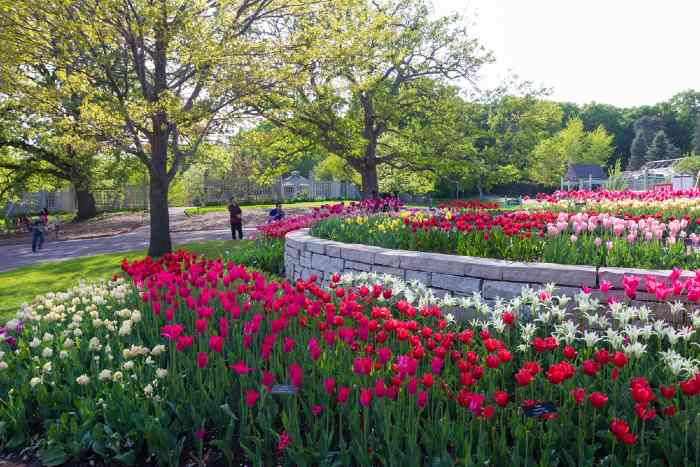 Blooming tulips in spring at Minnesota Landscape Arboretum at one of the best places to see in Minnesota