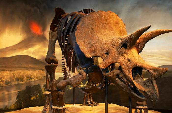 Dinosaur fossil and ancient earth environment