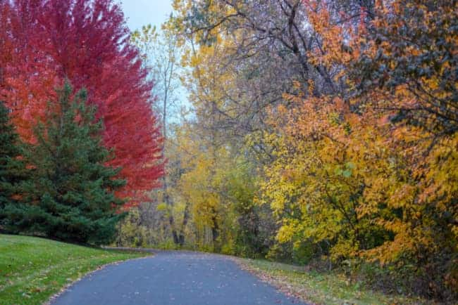 View of a paved path lined with trees displaying brilliant fall colors near Eden Prairie, one of the best places to live in Minnesota.