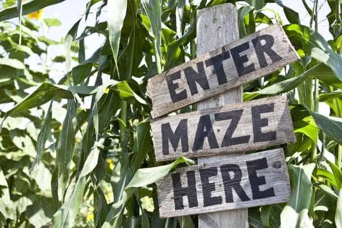 Corn maze sign in corn maze.