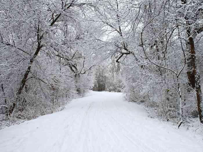 Ski trail in winter forest in Minnesota