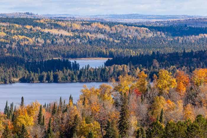 Fall foliage vista of the Superior National Forest