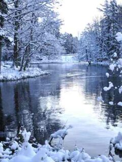 Lake in winter forest